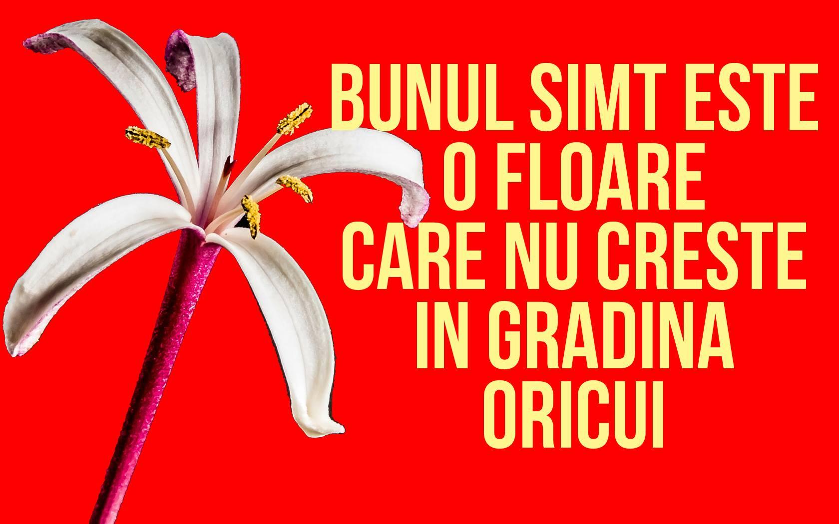 Mesaje frumoase despre caracter - Bunul simţ este o floare care nu creşte în grădina oricui!